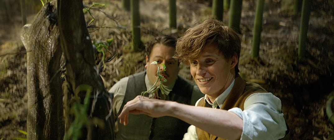 "DAN FOGLER as Jacob, EDDIE REDMAYNE as Newt and a beast called a Bowtruckle in Warner Bros. Pictures' fantasy adventure ""FANTASTIC BEASTS AND WHERE TO FIND THEM,"" a Warner Bros. Pictures release."