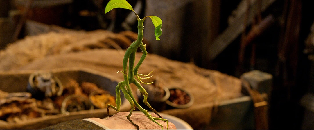 "A beast called a Bowtruckle in Warner Bros. Pictures' fantasy adventure ""FANTASTIC BEASTS AND WHERE TO FIND THEM,"" a Warner Bros. Pictures release."