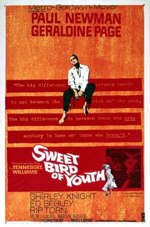 Sweet Bird of Youth - Image - Image 8