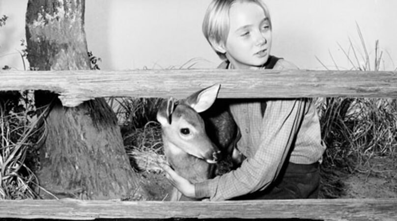 The Yearling - Image - Image 3