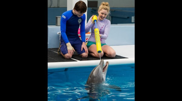 Dolphin Tale 2 - Image - Image 1