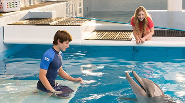 Dolphin Tale 2 - Image - Image 2