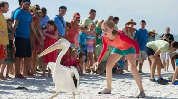 Dolphin Tale 2 - Image - Image 13