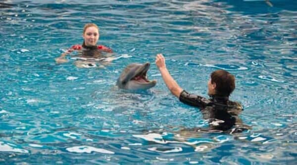 Dolphin Tale 2 - Image - Image 26