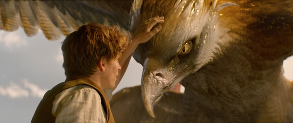 """EDDIE REDMAYNE as Newt Scamander and a beast called a Thunderbird in Warner Bros. Pictures' fantasy adventure """"FANTASTIC BEASTS AND WHERE TO FIND THEM,"""" a Warner Bros. Pictures release."""